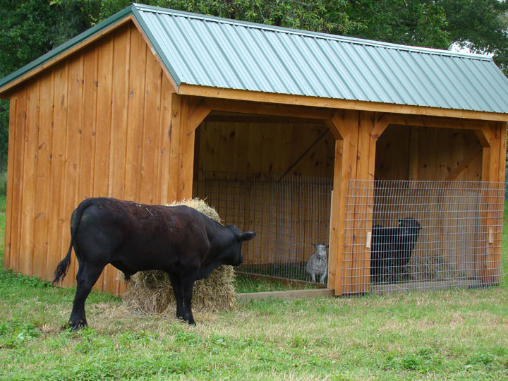 Small Farm Shelters : Rent to own storage buildings sheds barns lawn